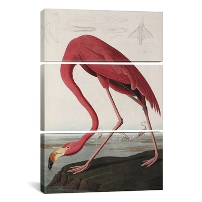 """Flamingo Drinking At Water's Edge by John James Audubon 3 Piece Painting Print on Wrapped Canvas Set Size: 60"""" H x 40"""" W x 1.5"""" D 1472-3PC6-60x40"""