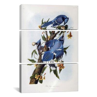 "Jay by John James Audubon 3 Piece Painting Print on Wrapped Canvas Set Size: 60"" H x 40"" W x 1.5"" D 1480-3PC6-60x40"