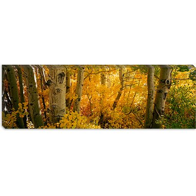 "iCanvasART Aspen Trees in a Forest, Californian Sierra Nevada, California, USA Canvas Wall Art -Configuration:1 Panel, Size:12"" Hx36"" Wx1.5 at Sears.com"