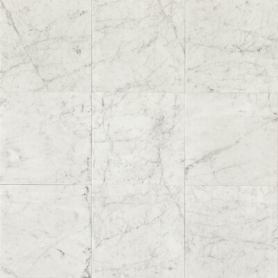 Honed 12 x 12 Marble Field Tile in White Carrara