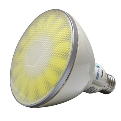 Outdoor Lighting Bulb Color Temperature: Warm White (2800K)