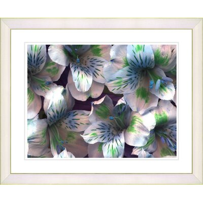 """Spring Flowers - Blue"""" by Zhee Singer Framed Graphic Art Frame Color: Creamy White n763-538B-16x20WH"""