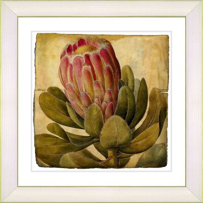 Vintage Botanical No. 57A by Zhee Singer Framed Giclee Print Fine Wall Art Size: 14