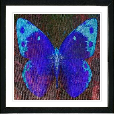 "?Berry Blue Canvas Butterfly? by Zhee Singer Framed Print Size: 20"" x 20"" LRUN1792 39051944"