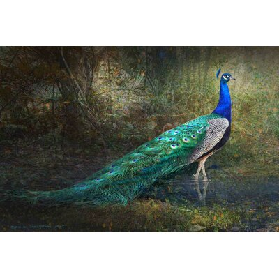'Jungle Stream Peacock' by Chris Vest Painting Print on Wrapped Canvas MH-MWWCV-81629-C-18