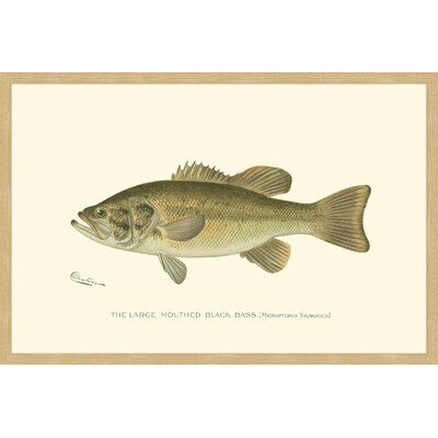 "Large Black Bass"" Framed Painting Print MH-WAG-41-NNFP-18"