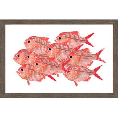"'Golden Snapper' Framed Painting Print Size: 20"" H x 30"" W x 1.5"" D MH-MICPAN-08-NRFP-30"