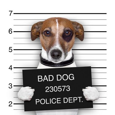 'Bad Dog' Photographic Print on Glass CH-WG121600