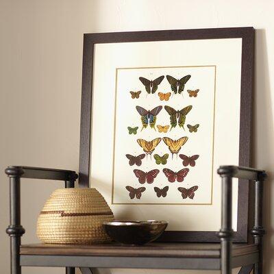 Papillon Framed Graphic Art Print