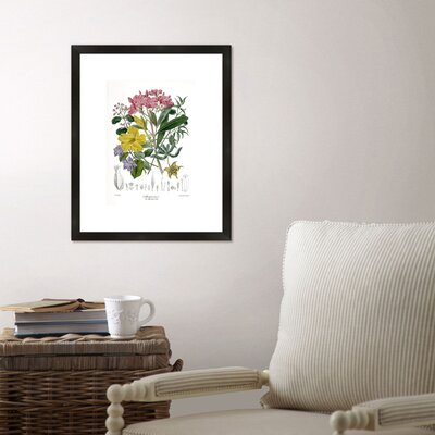 Birch Lane Botanical Framed Graphic Art Print