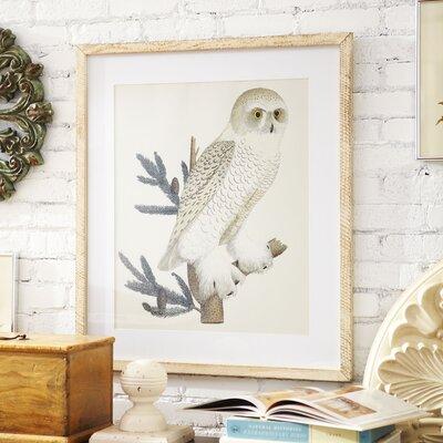 Owl Framed Print 3-24246