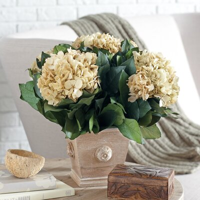 Preserved Ivory Hydrangea Arrangement