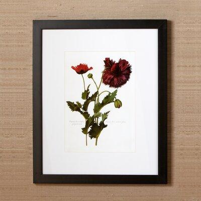 Sepal Framed Print I