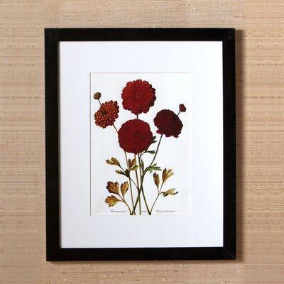 Sepal Framed Print II