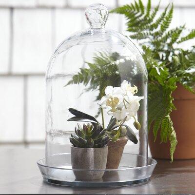 Glass Bell Jar Terrarium Size: Tall