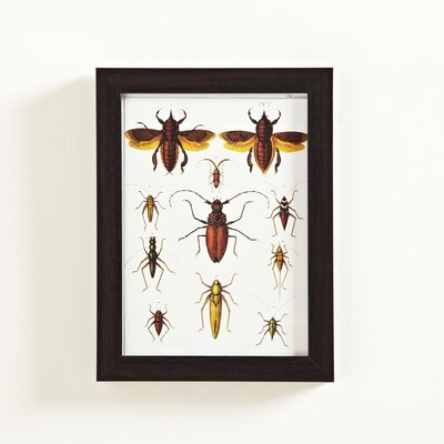 Insect Study Graphic Art