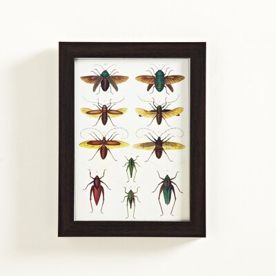 Insect Study Framed Graphic Art Print