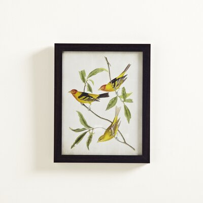 Bird Paradise Painting Print