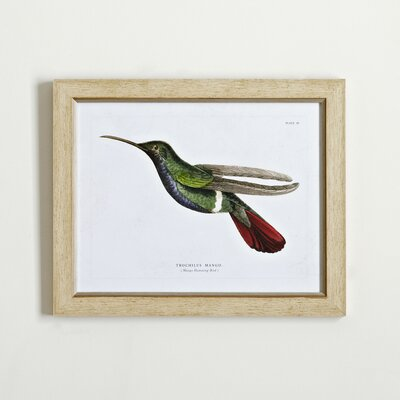 Hummingbird Framed Print II