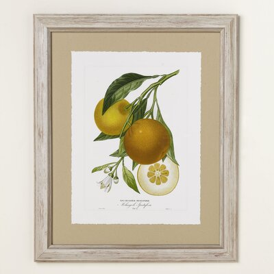 Orange Zest Framed Print II