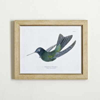 Hummingbird Framed Print I