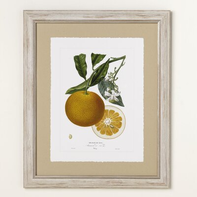 Orange Zest Framed Print I
