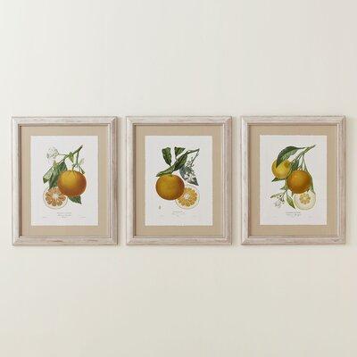 Orange Zest Framed Print Collection-Orange Zest Framed Print III