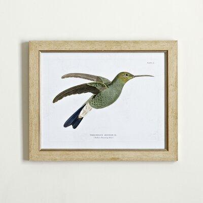 Hummingbird Framed Print III
