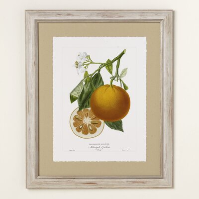Orange Zest Framed Print III