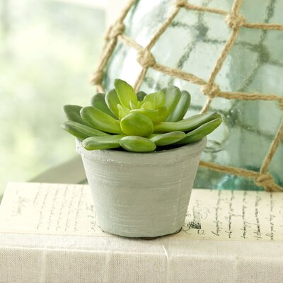 Faux Cabbage Succulents (Set of 2)