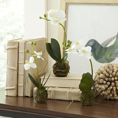 Rustic Faux Orchid (Set of 2)