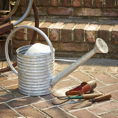 Tracy Watering Can