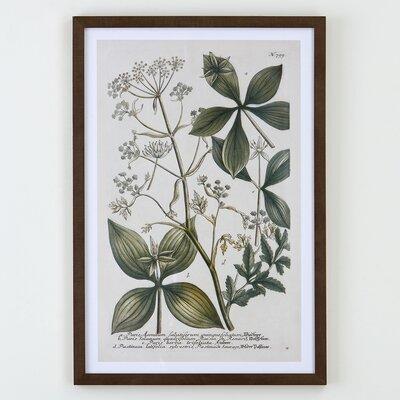 Classic Botanical Framed Print