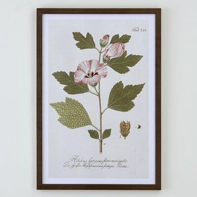 Everly Botanical Framed Print I