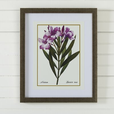 Birch Lane Vintage Floral Framed Print IV