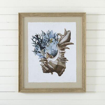 Mollusk Framed Print III