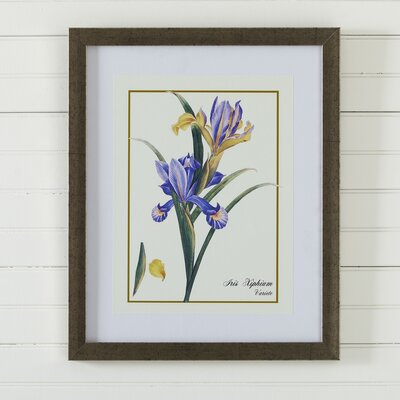 Birch Lane Vintage Floral Framed Print II
