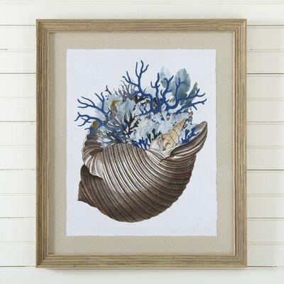 Mollusk Framed Print II