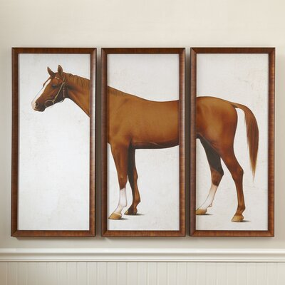 Horse Triptych Framed Print