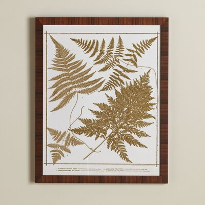 True Fern Framed Print III