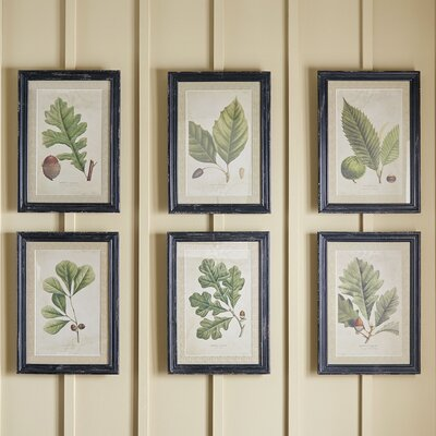 Deciduous Framed Prints