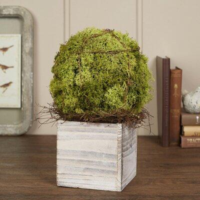 Filius Preserved Moss Topiary
