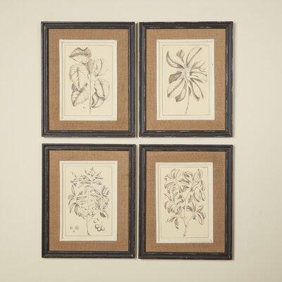 Botanica Framed Prints (Set of 4) Birch Lane�