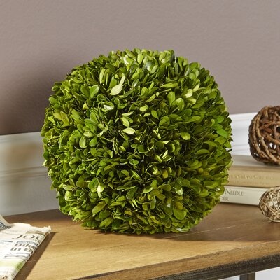 Preserved Boxwood Ball Decor