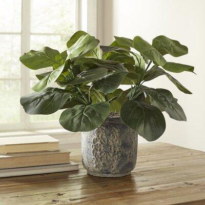 Potted Fiddle-Leaf Fig Desktop Plant
