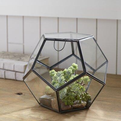 Socorro Glass Terrarium