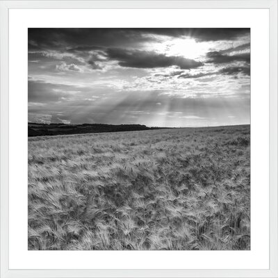 Wheat Field, Framed Paper Print Frame Color: White, Size: 21