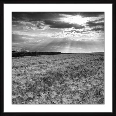 Wheat Field, Framed Paper Print Size: 14