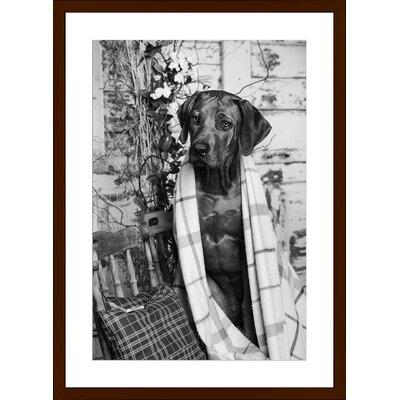 Rhodesian Ridgeback, Framed Paper Print Size: 18