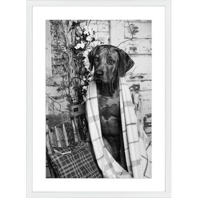 Rhodesian Ridgeback, Framed Paper Print Frame Color: White, Size: 28